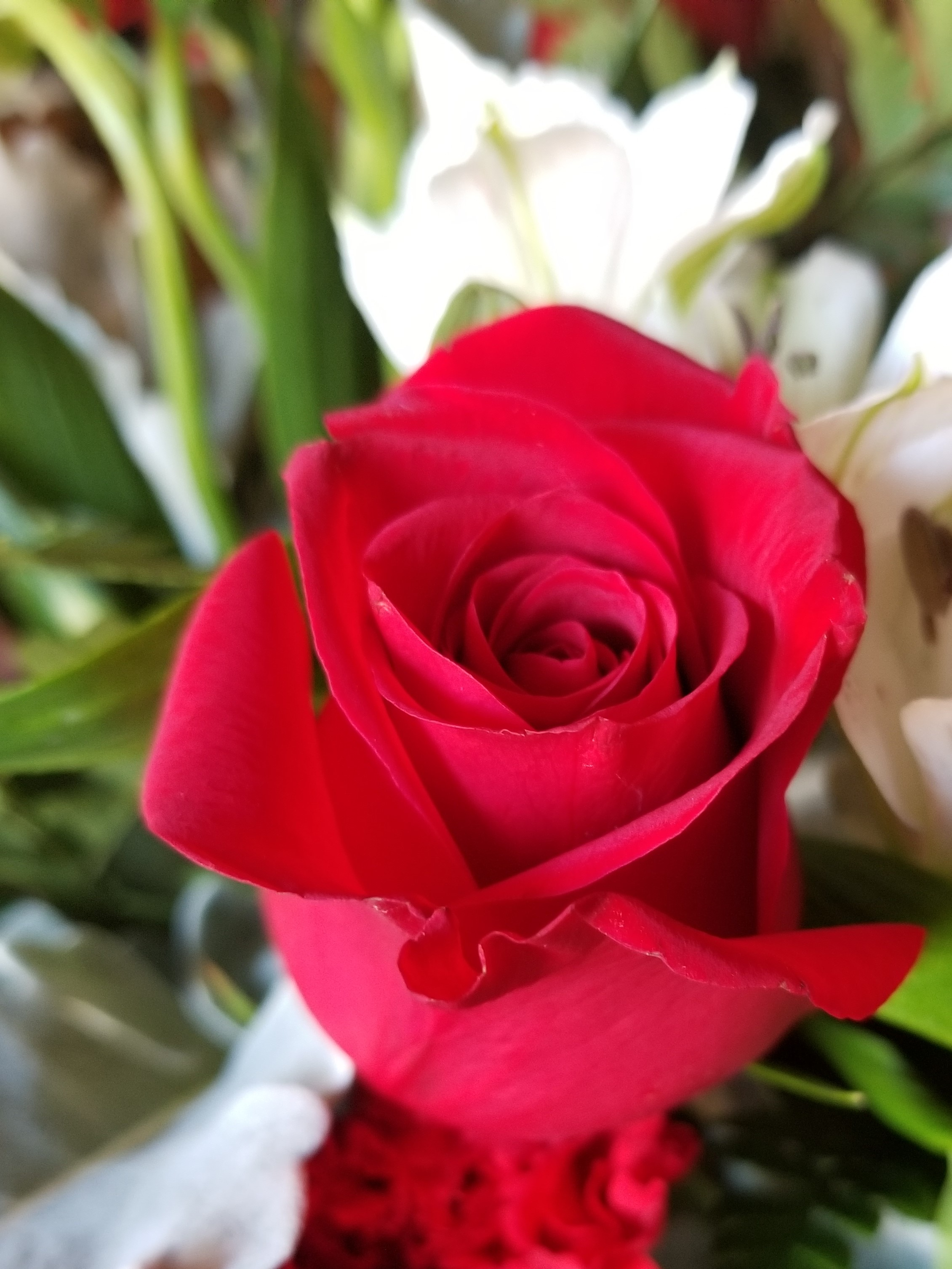 What Are The Best Flowers To Give On Valentine 39 S Day