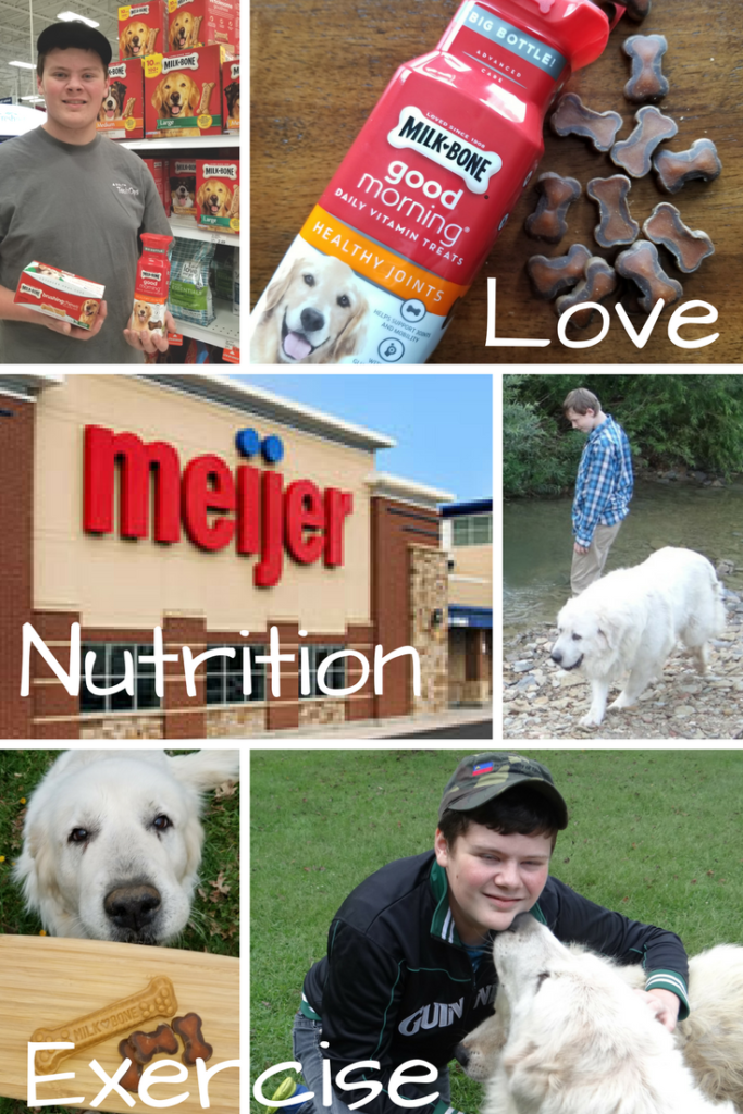 My Must Haves For a Happy, Healthy Large Breed Dog!
