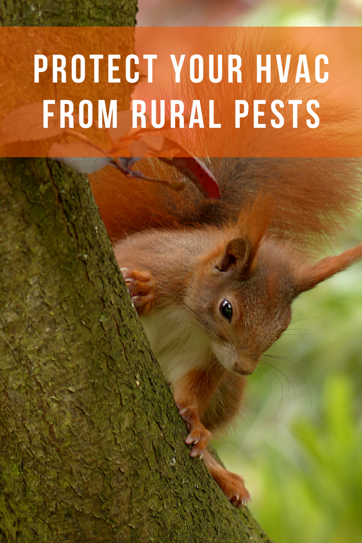 Protect Your HVAC From These 7 Rural Pests