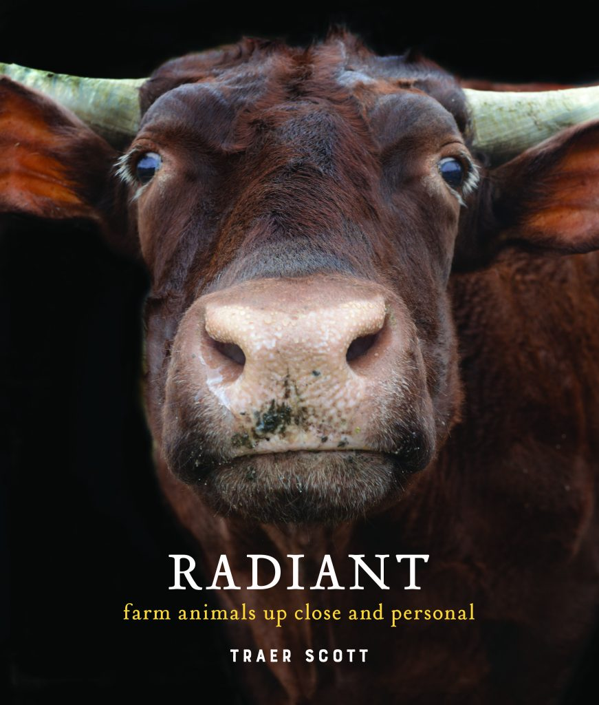50 by 50 - RADIANT: Farm Animals Up Close and Personal