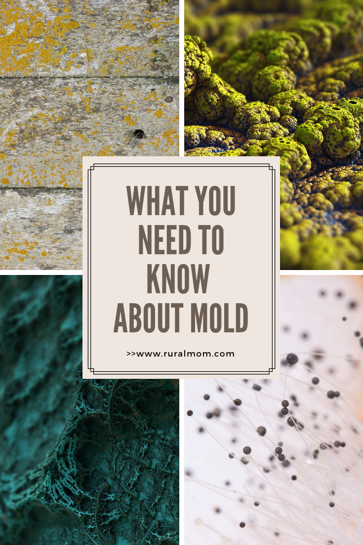 Don't Let Mold Beat You