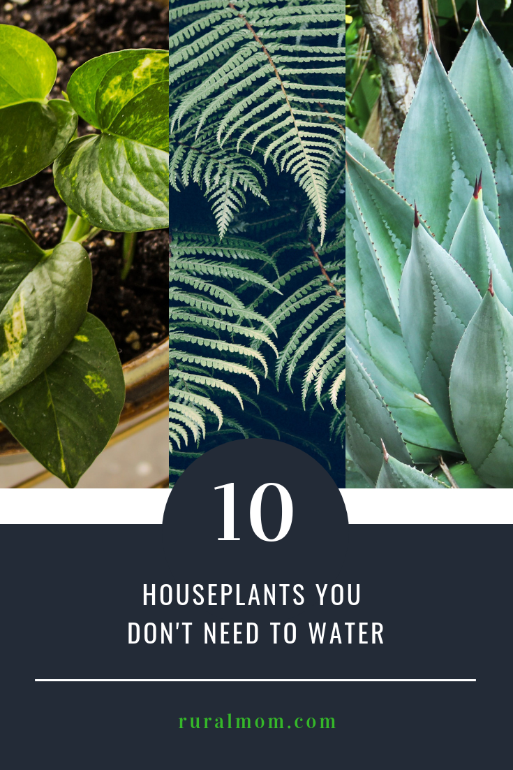 10 Houseplants You Don't Need to Water