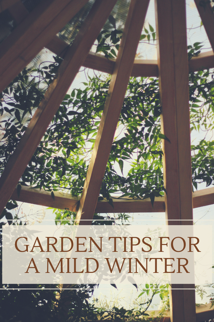 Garden Tips for a Mild Winter