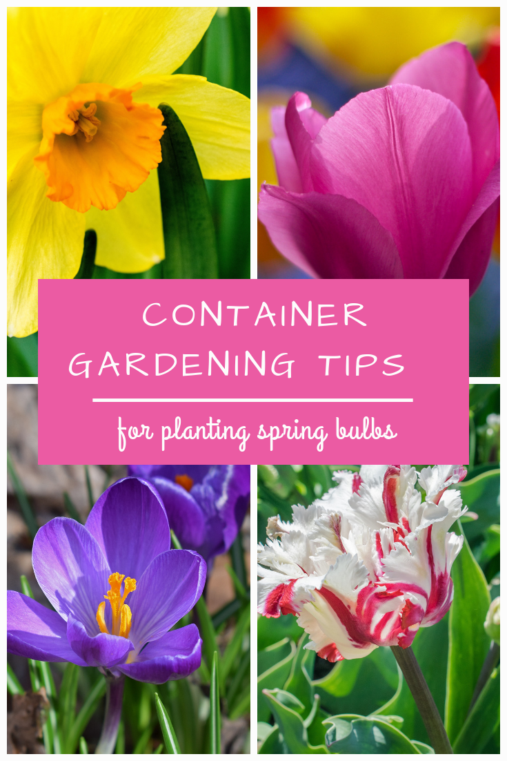 Container Gardening Tips for Planting Spring Bulbs