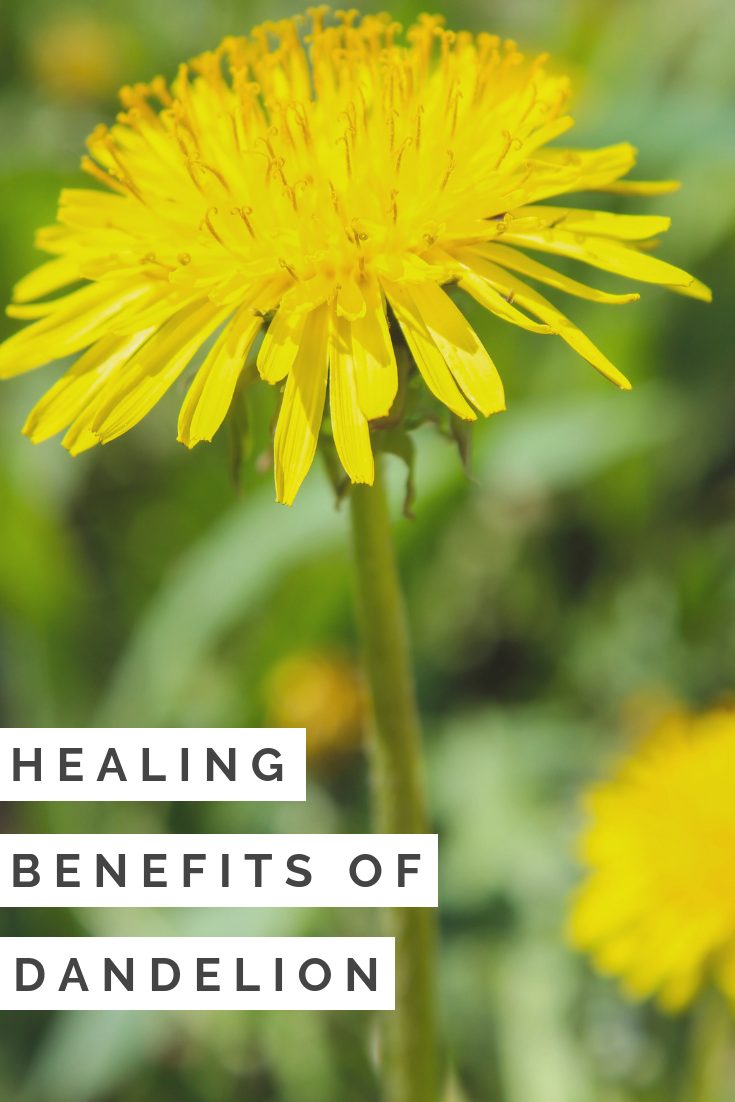 The Healing Benefits of Dandelion