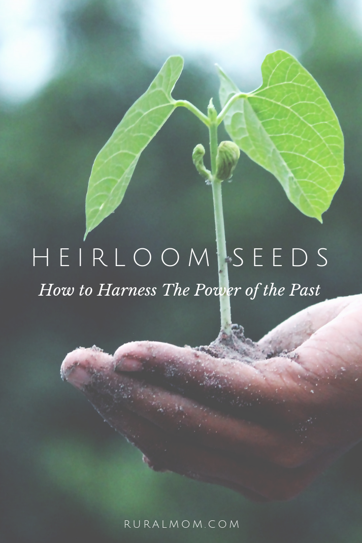 Heirloom Seeds: How to Harness The Power of the Past