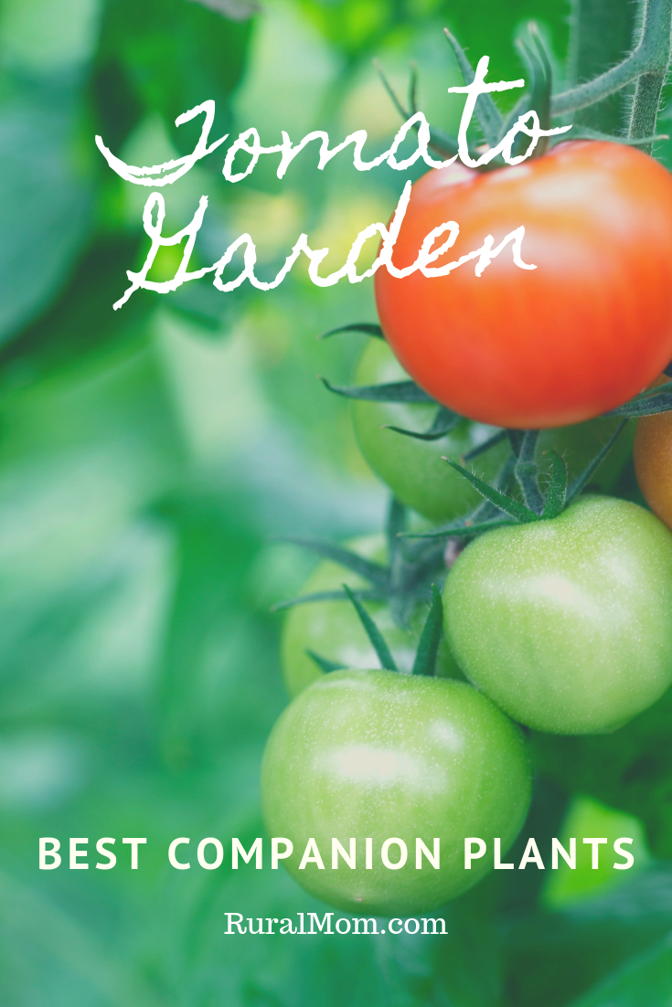 Best Companion Plants for Your Tomato Garden