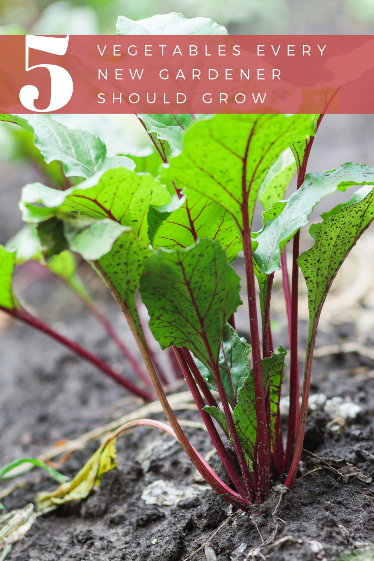 5 Vegetables Every New Gardener Should Grow