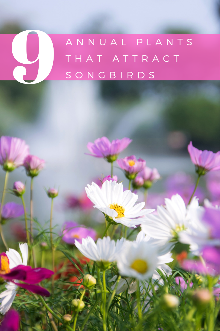 9 Annual Plants That Attract Songbirds to Your Garden
