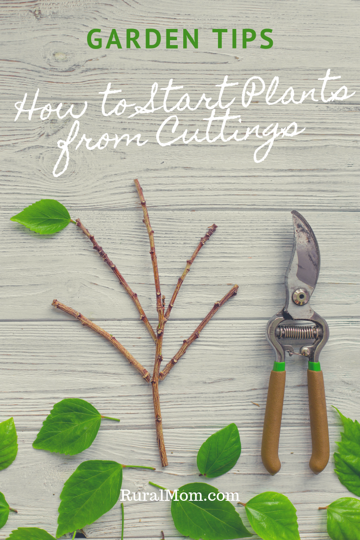 How to Start Plants from Cuttings