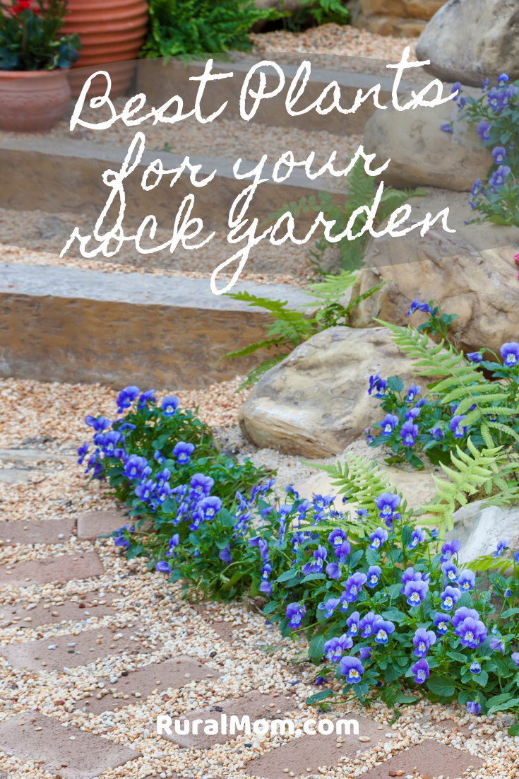 Best Plants for Your Rock Garden
