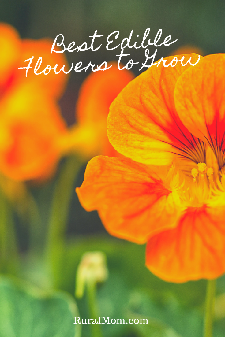 Best Edible Flowers to Grow in Your Garden