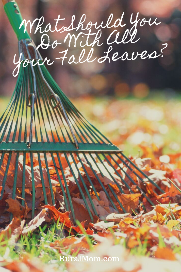 What Should You Do With All Your Fall Leaves?