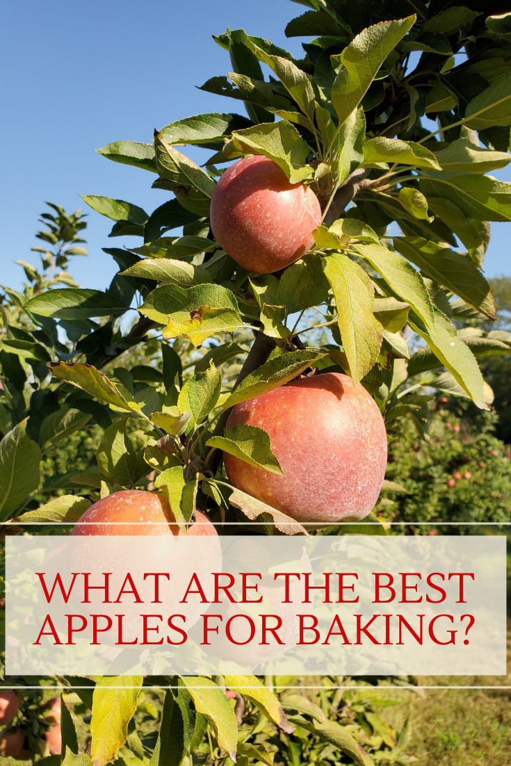 What are the best apples for baking