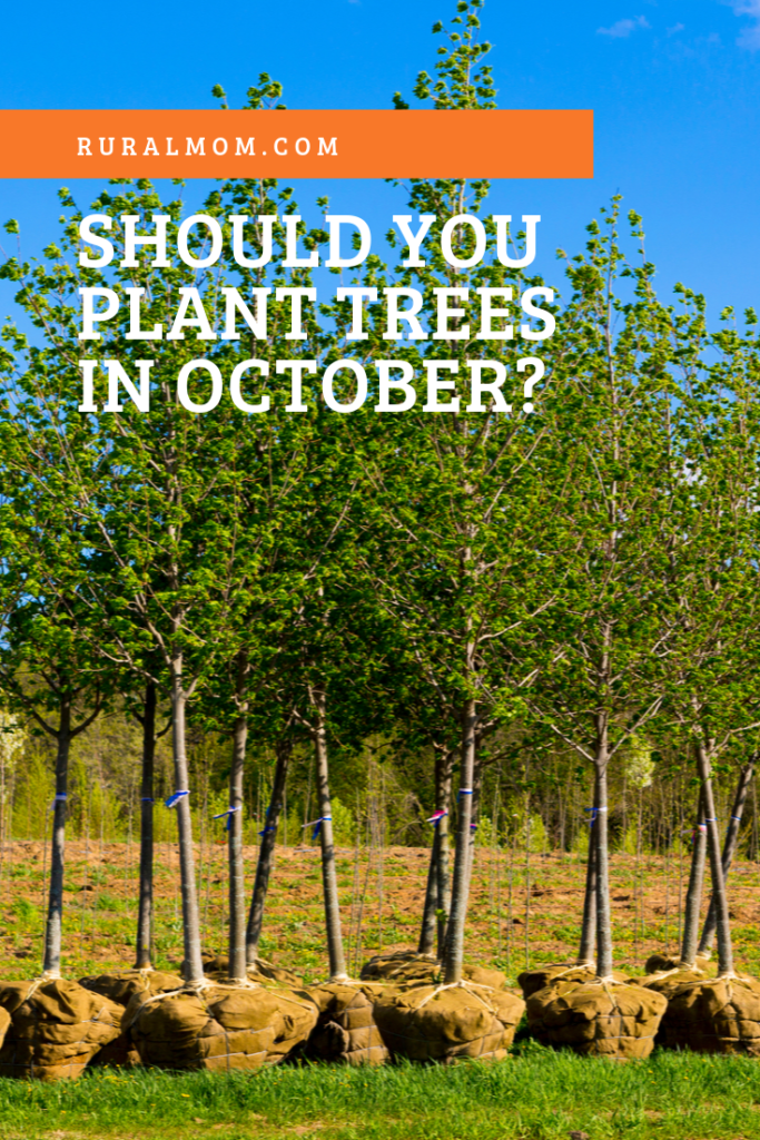 Is it too late to plant trees in October?