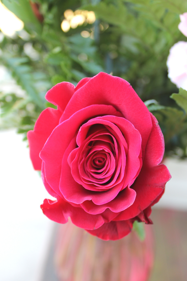 Caring for Valentine's Day Roses