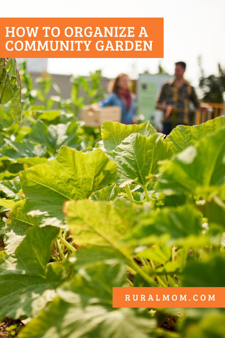 How To Organize A Community Garden