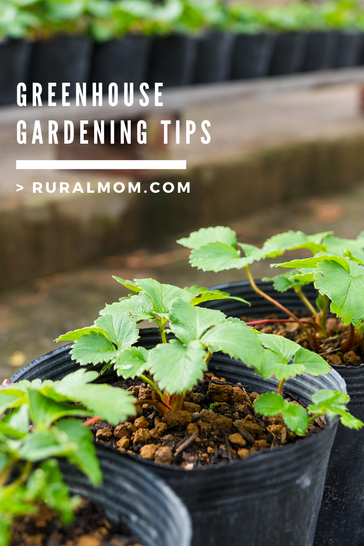 Greenhouse Gardening Tips