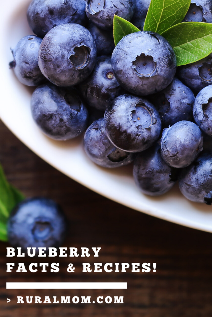 Immune Boosting Blueberry (Facts and Recipes!)