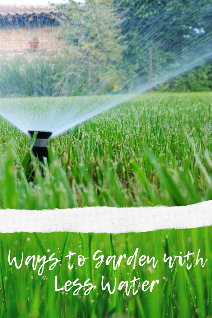 Ways to Garden with Less Water