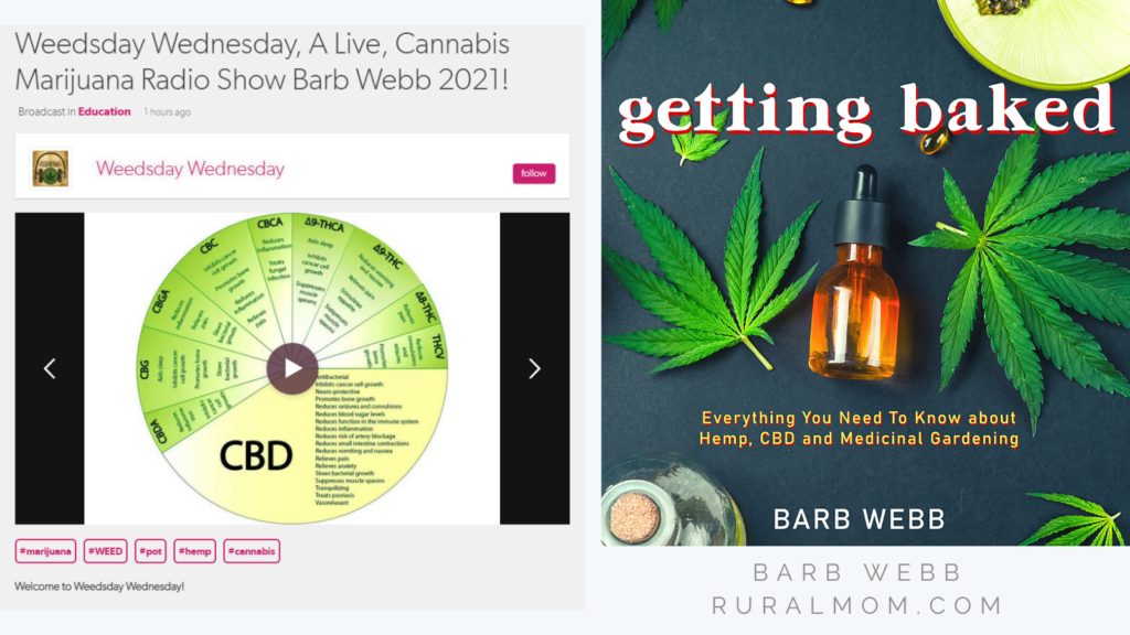 Weedsday Wednesday - Current CBD and Cannabis Trends