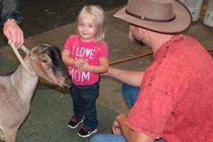 Goat at the state fair