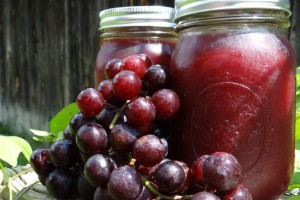 Grape Jelly Low Sugar Canning Recipe