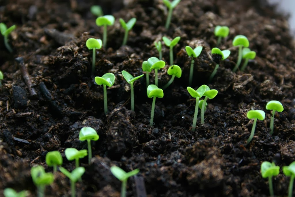 Seed Selection: Deciding When to Plant Vegetables in Your Area #garden #DIY