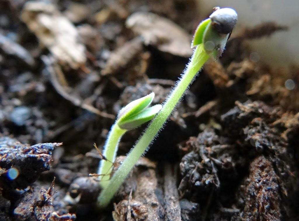 Farm To Table: Growing Your Own Kitchen Herb Garden #Gardening #DIY