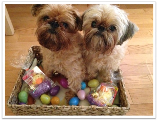 dogs Easter basket