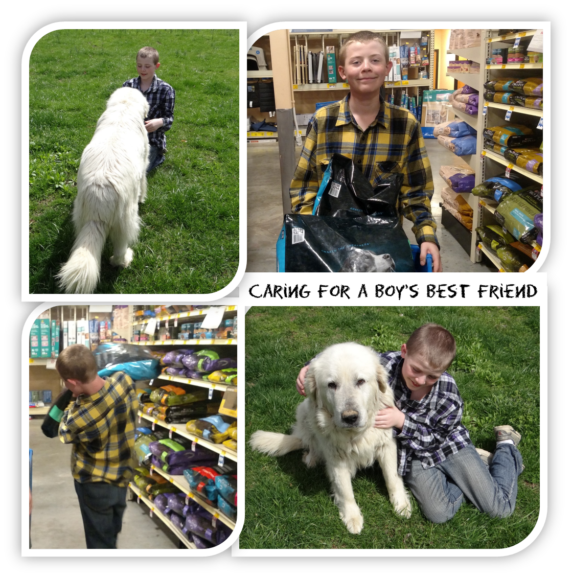 How to Involve your Child in Daily Dog Care #ProPlanPet #Ad #cbias