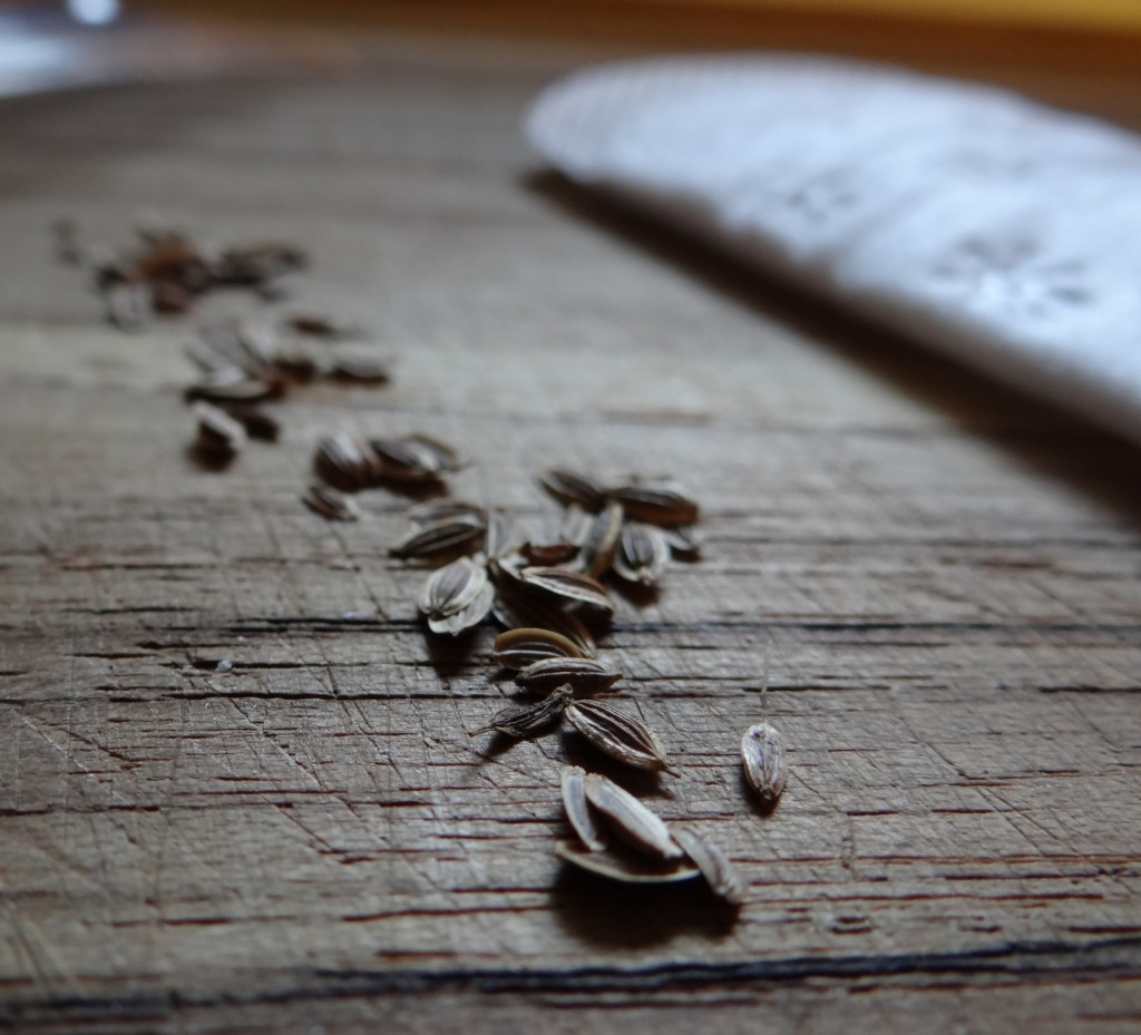How to Test Old Seeds for Viability #RecycleYourPeriodPad #sponsored
