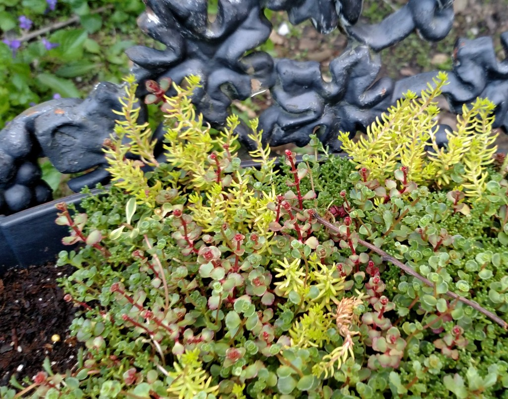 Get an Instant Green Thumb with Costa Farms Drop and Grow Sedum Tiles