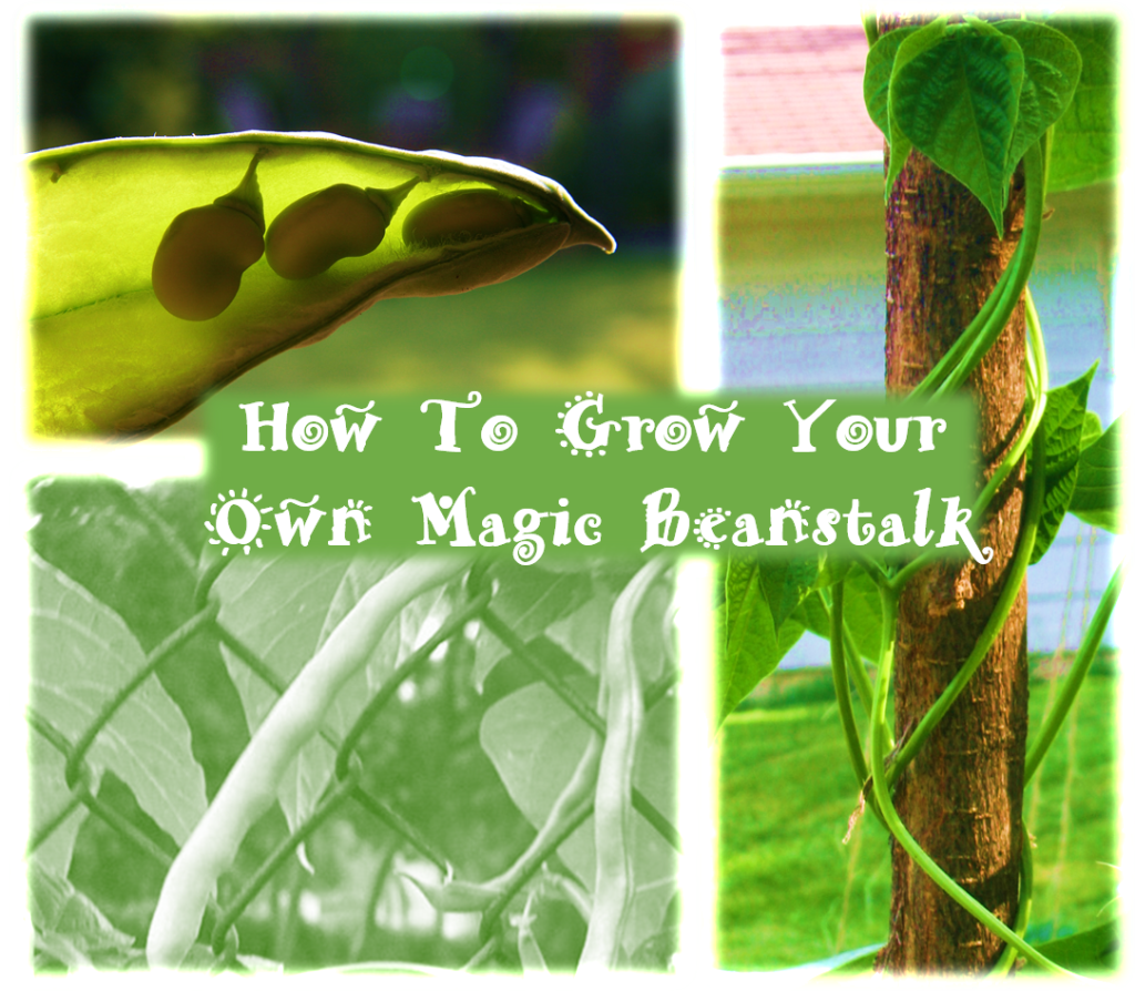 How To Grow Your Own Magic Beanstalk