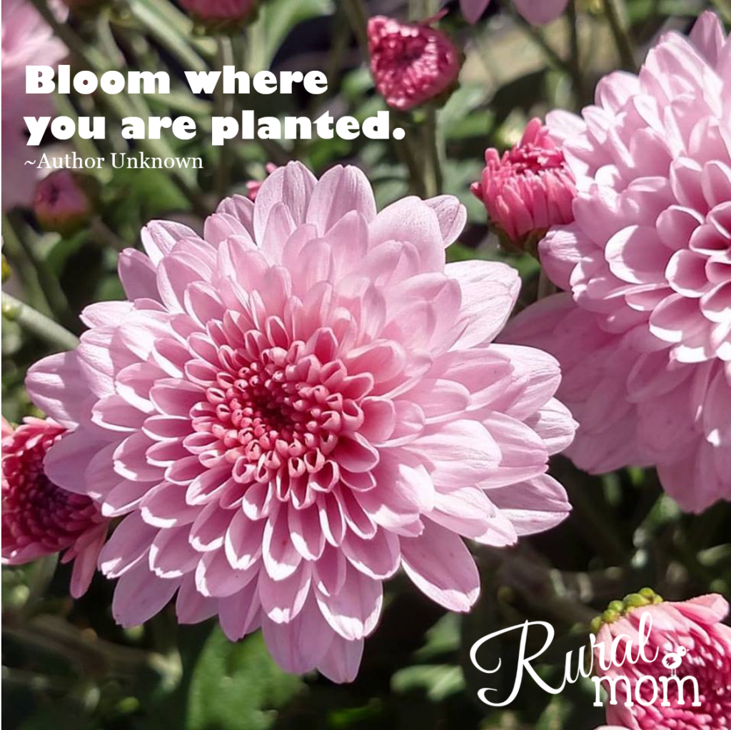 Gardening Quotes bloom where you are planted