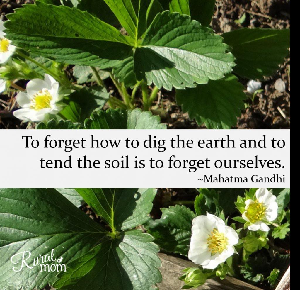 Gardening Quotes garden earth