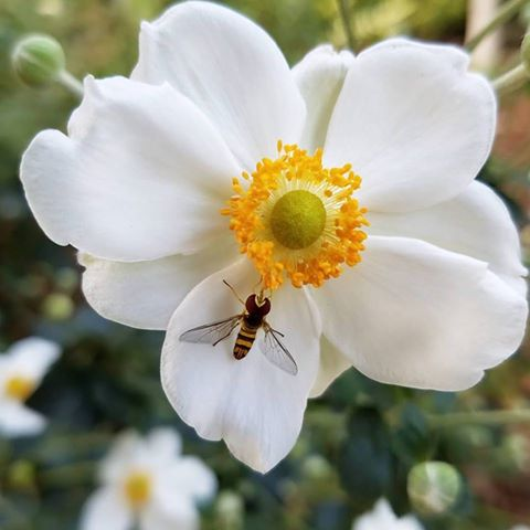 We Need The Bees - How You Can Help