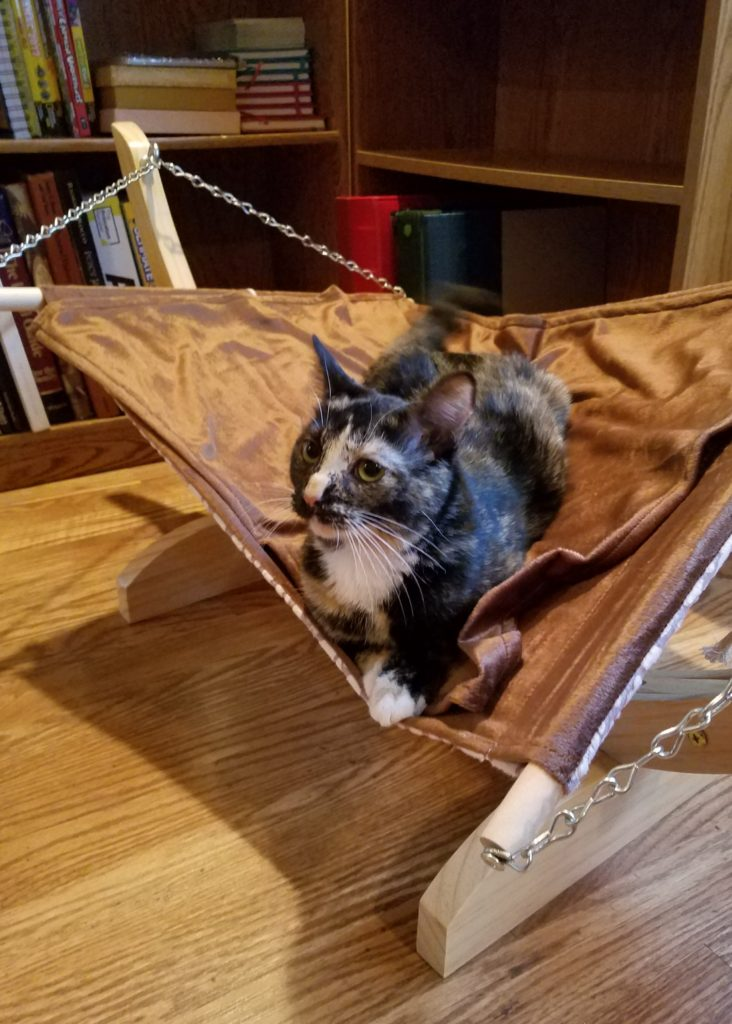 Farm Kittens and Cat Hammocks