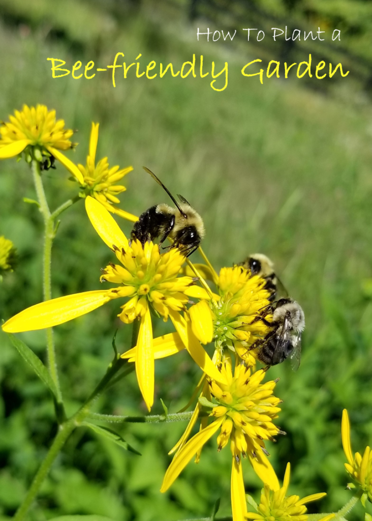 What Are Bee-Friendly Plants? | Plant a Bee Garden!