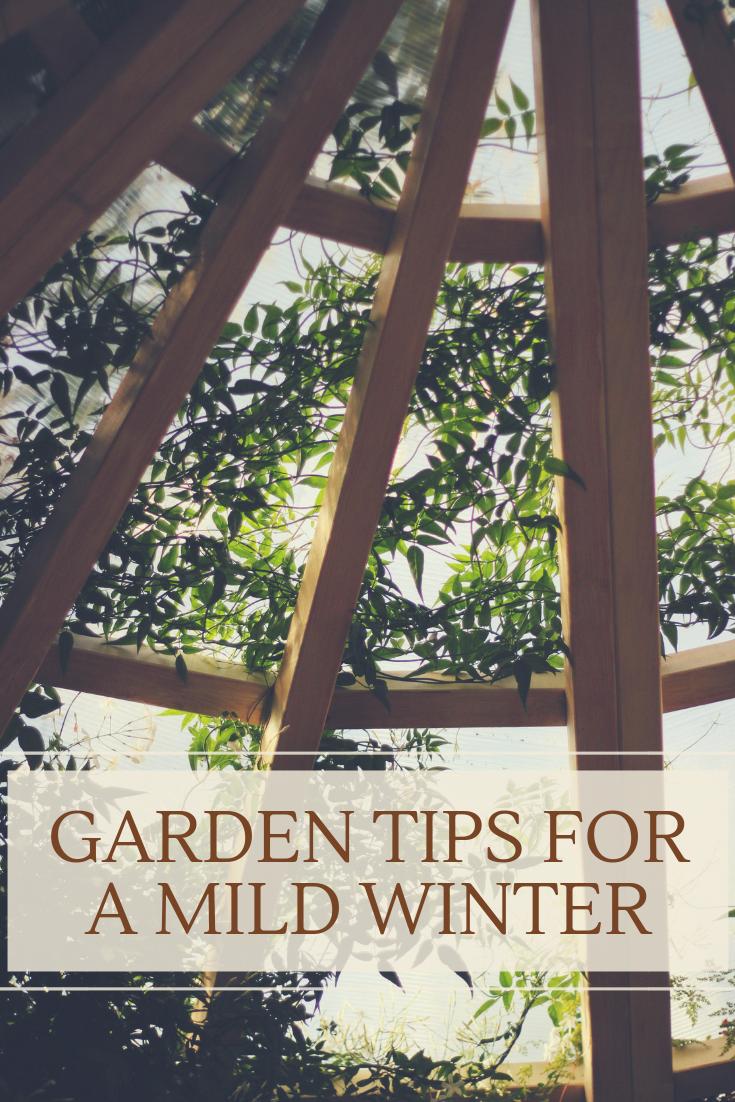 Garden Tips for a Mild Winter