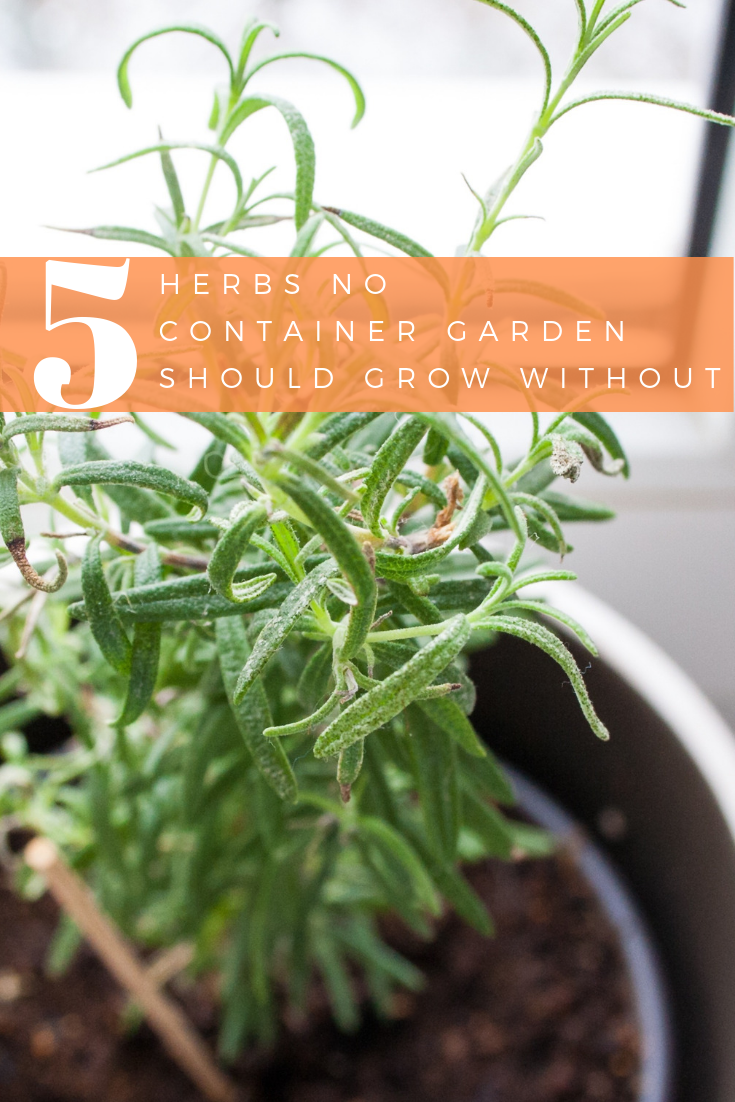 5 Herbs No Container Garden Should Grow Without