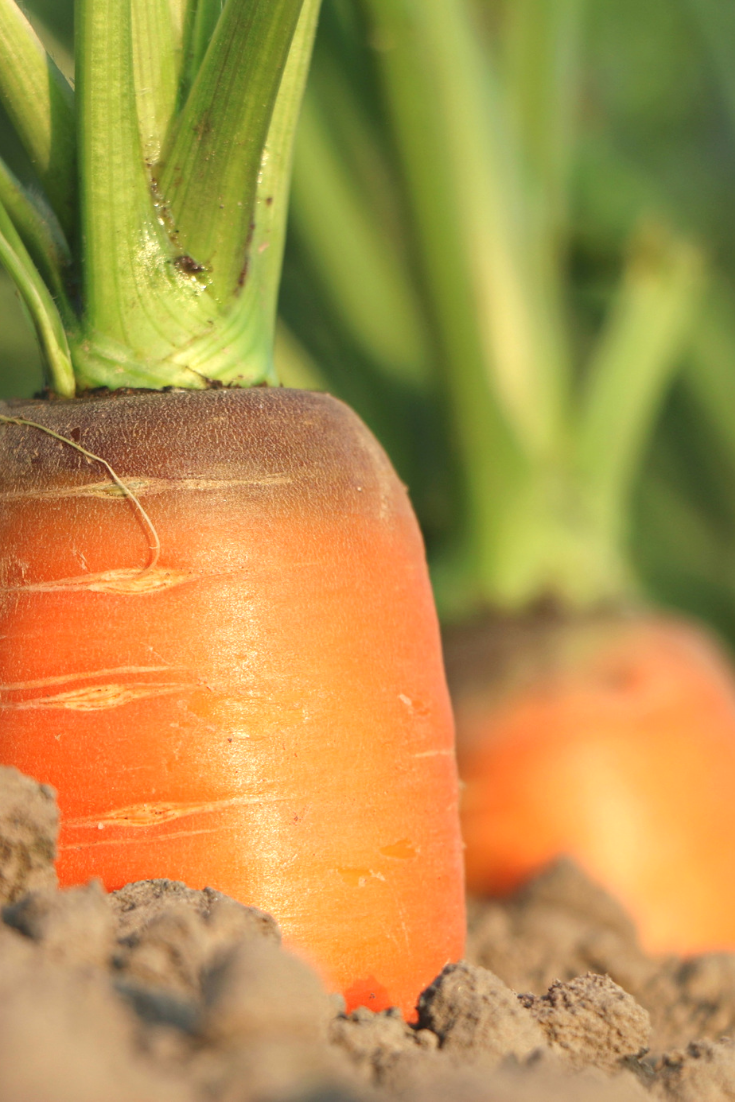 Succession Planting and Other Clever Ways to Grow More Vegetables in Less Space