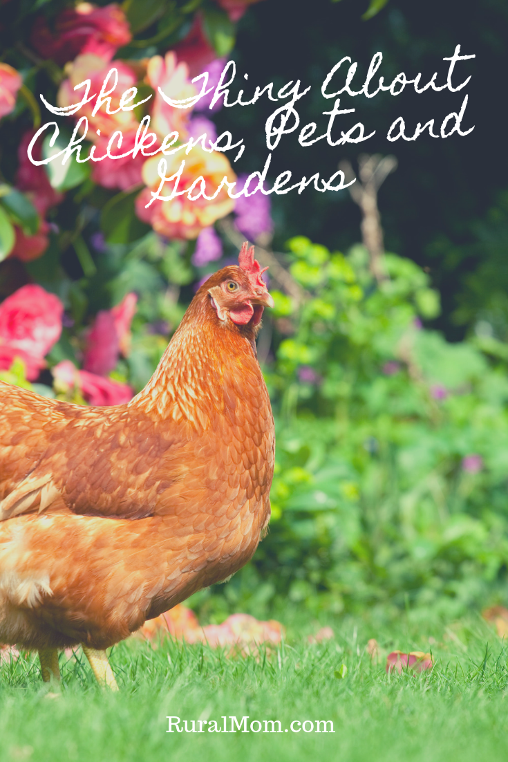 The Thing About Chickens, Pets and Gardens