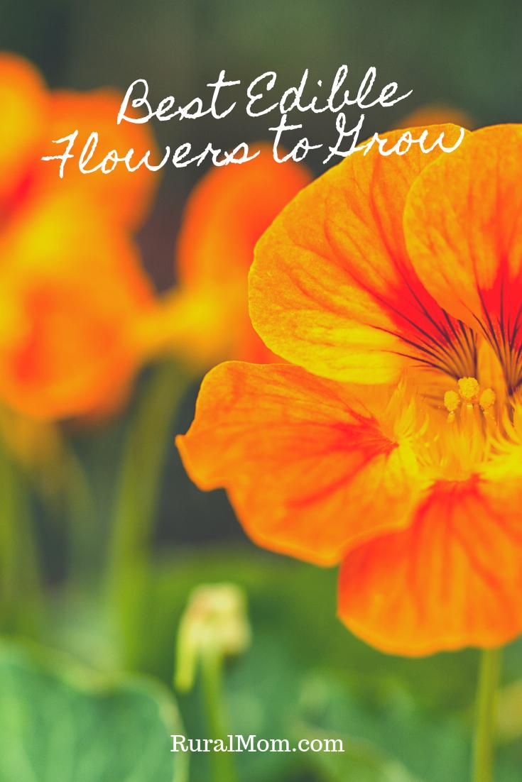 Best Edible Flowers to Grow in Your Garden
