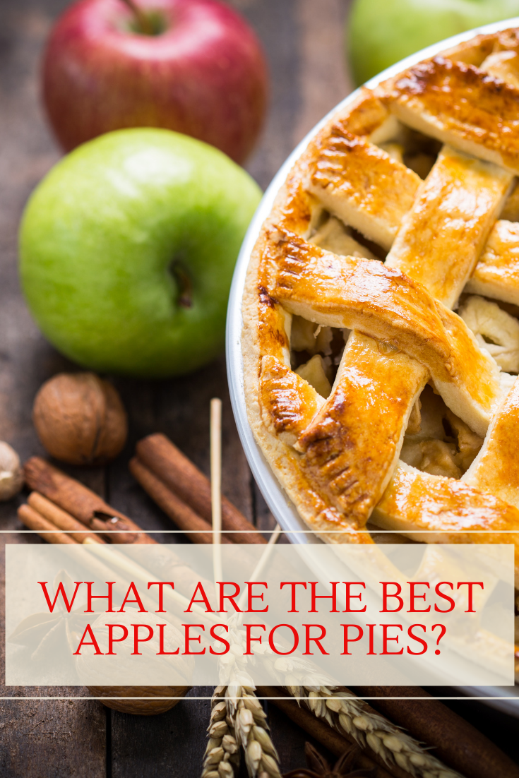 Before looking at the apple varieties that are best for apple pie, learning how to spot quality apples is equally important.