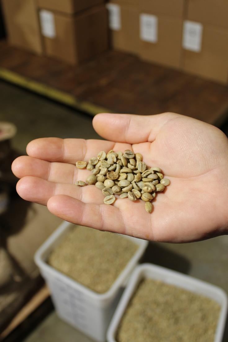 How Coffee Beans Grow