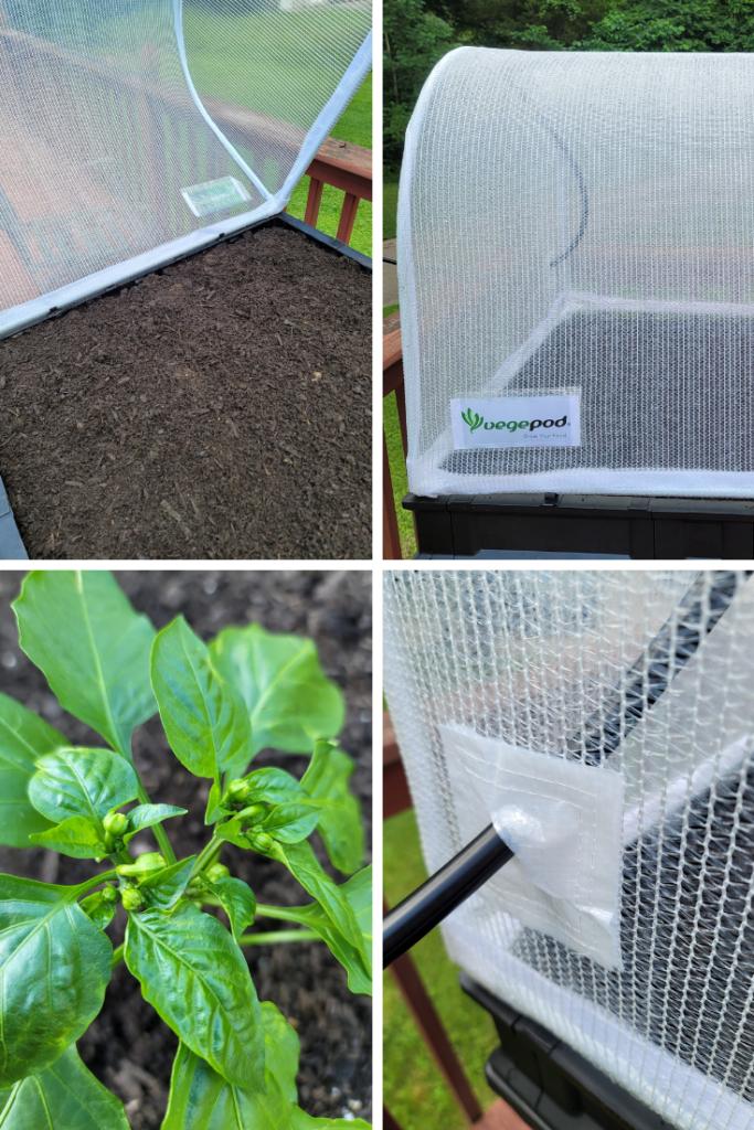 How do Pepper Plants Grow Best?