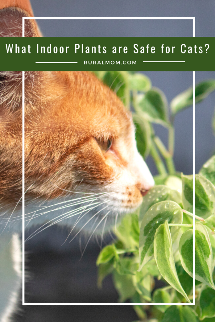 What indoor plants are safe for cat
